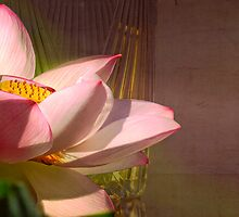 Lotus by a Vase by Mark Richards
