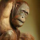 Orangutan by Lindie