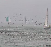 Sailing with birds by vincefoto