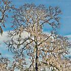 Ghostly Trees by vincefoto