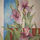 Iris Rhapsody by Ellen Keagy