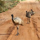 Emus ~ Outback Traffic Hazard by Robert Elliott
