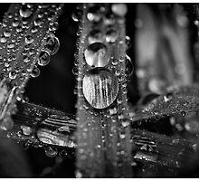 Blades of Dew 1 by Cliff Worsham