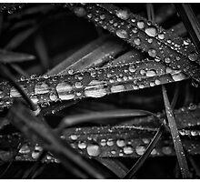 Blades of Dew 2 by Cliff Worsham