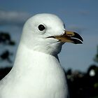 Female Seagull by waxyfrog