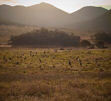 Mob of kangaroos, Namadgi National Park, Australia by Simone Clark