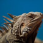Aruba - Lizards Rule by Simon Hills