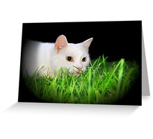 Ready to Pounce! Greeting Card