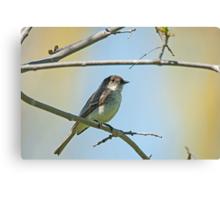 Willow Flycatcher (Empidonax traillii) Canvas Print