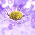 Wild Daisy in Lavender Light by Kate Eller