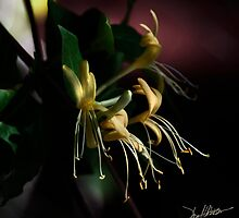 Honeysuckles 10 by Patito49
