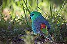 Pretty Birdie II by yolanda