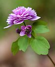 Pink Anemonella by T.J. Martin