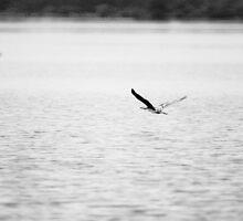 Low Flying Bird by Ivan Prosper