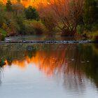Weir by Dave Callaway