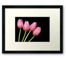 Four Pink Tulips Framed Print