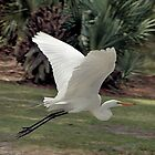 Great Egret by SuddenJim
