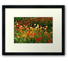 Colours Tulips Framed Print