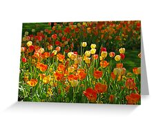 Colours Tulips Greeting Card