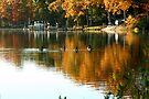 Geese on Hellen's Creek by Eileen McVey