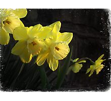 Waves of Spring Photographic Print
