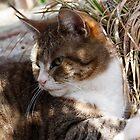 Cleo enjoying the spring sunshine by Joanne Plimmer