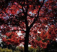 Autumn leaves by Jokertothethief