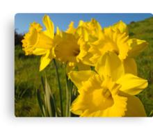 Golden Yellow Daffodil Flower Meadow art Baslee Troutman Canvas Print