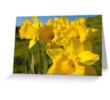 Golden Yellow Daffodil Flower Meadow art Baslee Troutman Greeting Card