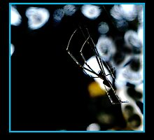 Einsy winsy Spider  by Burnie