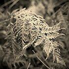 Frosted Ferns II by Aaron Bottjen
