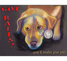 Golden Lab - Spay/Neuter Photographic Print