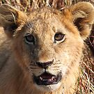 Lion Cub Portrait, Maasai Mara, Kenya  by Carole-Anne