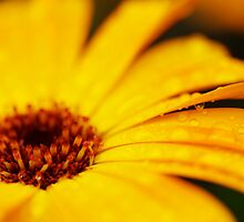The Yellow Flower II by JoeyKelava