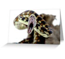 Darwin Carpet Python - yawning Greeting Card