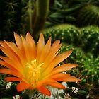Orange Cactus Flower by Arthur von Seckendorff