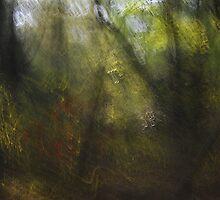 Shutter Paint in the Forest by lioncourt7