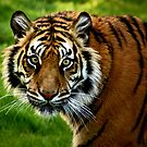 Big Cats of Wildlife Heritage Foundation by a~m .