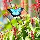 Tropical Treat - Ulysses butterfly by Jenny Dean