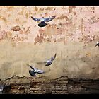Barcelona Spain, Birds in Flight by cmsdesign