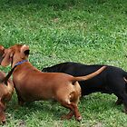Dachshunds in the park by RainbowsEnd