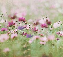 meadow by Anne Seltmann