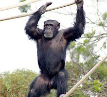 Me Tarzan. by Aussiebluey