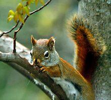 Gnawdy Squirrel by Brian Pelkey