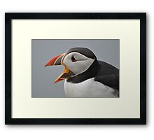 Laughing Puffin Framed Print