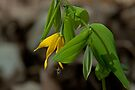 Bellwort and Bee by Mike Oxley