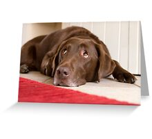 Chocolate Labrador Greeting Card
