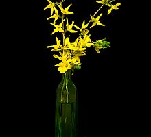 Forsythia Bouquet by Maria Dryfhout
