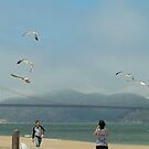 Seagulls at the Golden Gate Bridge by Marjorie Wallace