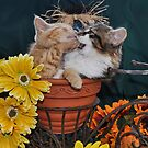 Venus &amp; Di Milo ~ Foot in Mouth ~ Kitty Cat Kitten in Fall Colours by Chantal PhotoPix